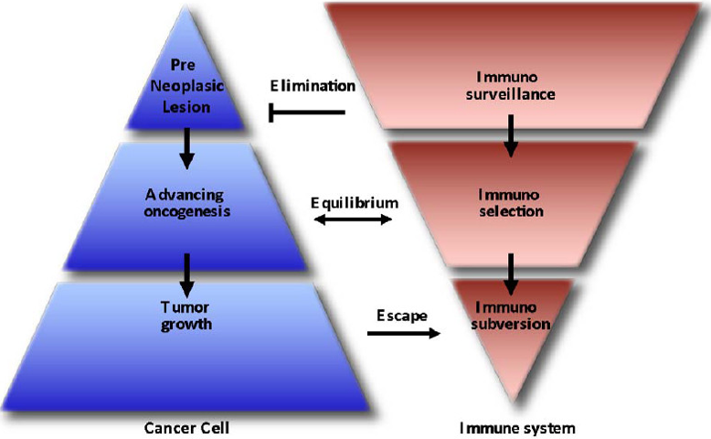Cancer and Immune System