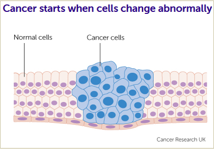Cancer Cells Info