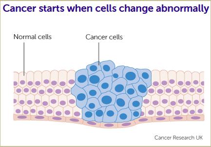 Cancer Cells Info